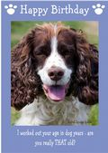 "English Springer Spaniel-Happy Birthday - ""Are You Really THAT Old"" Theme"